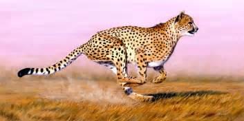 Is A Jaguar Faster Than A Cheetah Se Gepard Bilder Se Gepardbild Und Foto Tier Bilder