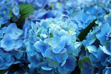 Home Color Palette 2017 by The Science Of Blue Flowers Mnn Mother Nature Network