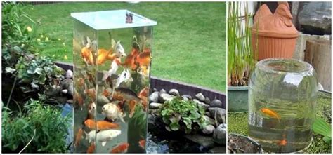 backyard aquarium image gallery outdoor aquarium