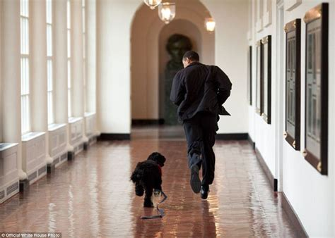 can obama stay in office barack obama photographer pete souza s favorite images