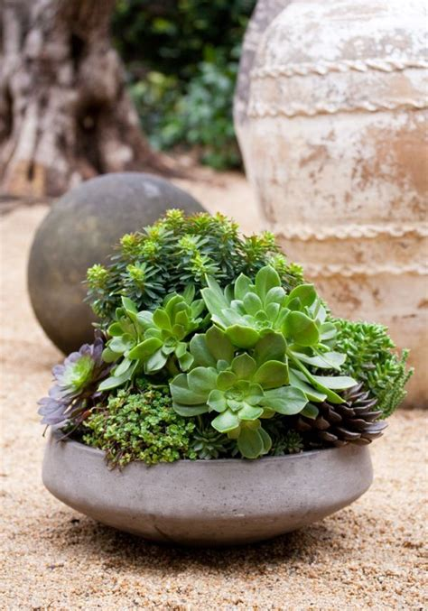 dish garden containers from lila b design planters terrariums and succulent