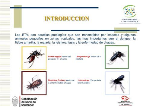imagenes vectoriales que es ids norte de santander enfermedades transmitidas por