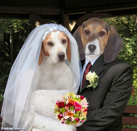 Wedding Anniversary Ideas Darwin by Beagle Pictures Freaking News