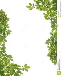 frame and leaf stock images image 25132894