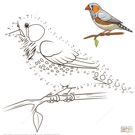creative birds dot to dot coloring books zebra finch bird dot to dot free printable coloring pages