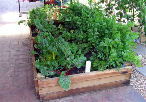 wicking garden bed wicking how to make self watering veggie boxes