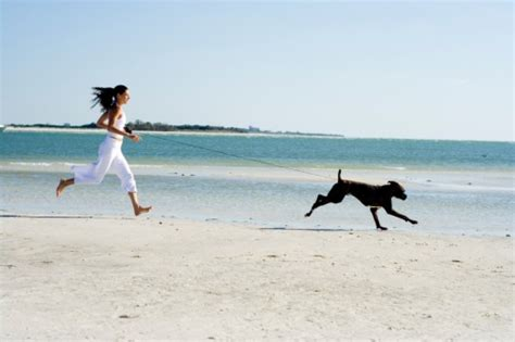 Is Walking For Detoxing From by Dogs That Exercise Themselves Thedogtrainingsecret