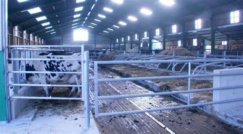 construction d une stabulation vaches laiti 232 res et vaches