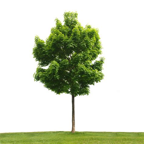 your home based business is like a tree ryan clements