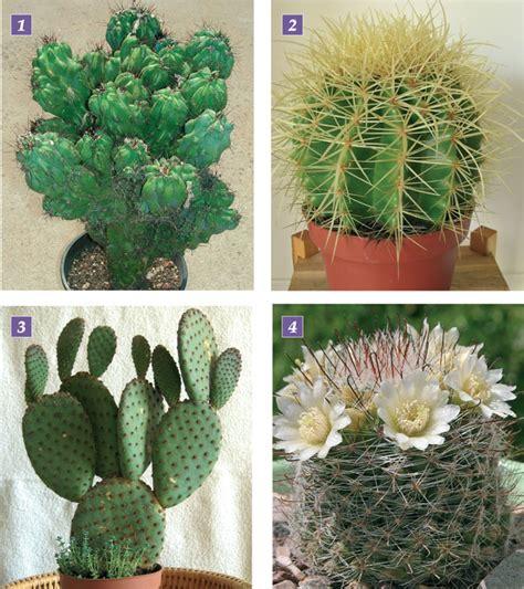 piante grasse da appartamento nomi e foto piante grasse le cactacee fai da te in giardino