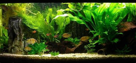 Aquascaping Live Rock Ideas Aquariums Images Aquarium Wallpaper And Background Photos