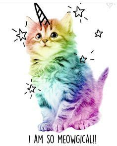unicorn cat caticorn images unicorn cat
