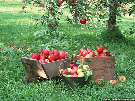 fruit tree garden how a garden can teach you to be more creative cauldrons