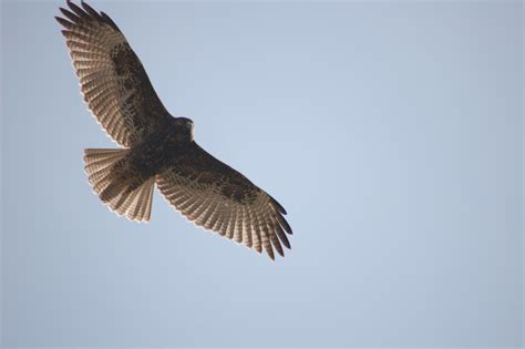 Backyard Bird Count No Bird Soars Too High If He Soars With His Own Wings