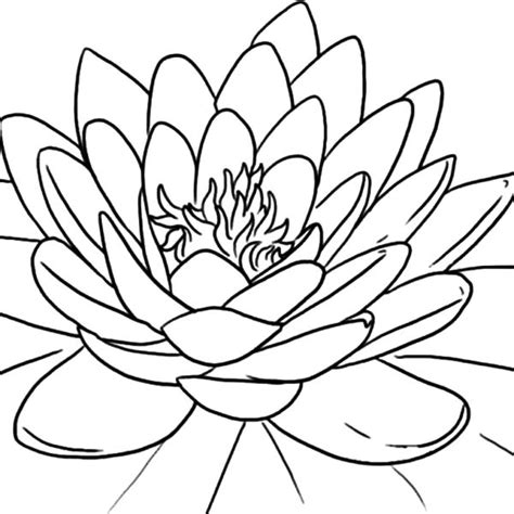 coloring pages of lotus flowers lotus flower coloring pages