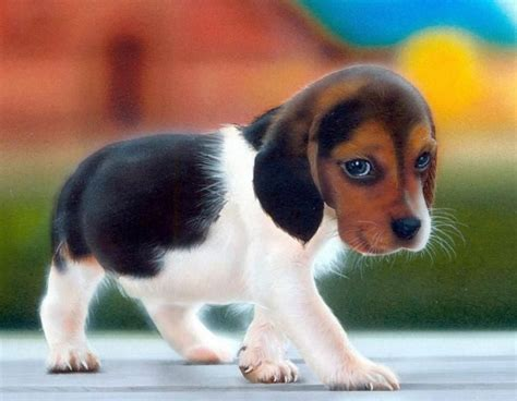 dogs that stay puppies small dogs that stay small www pixshark images galleries with a bite