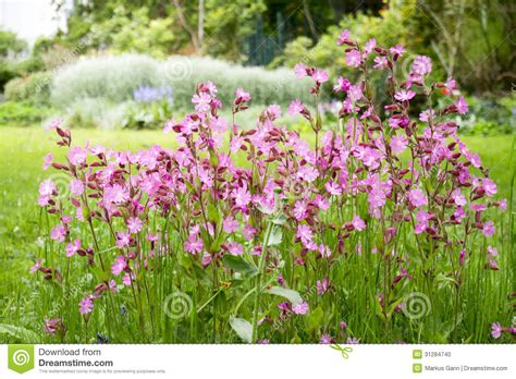 nice flower garden nice garden flowers stock photo image 31284740
