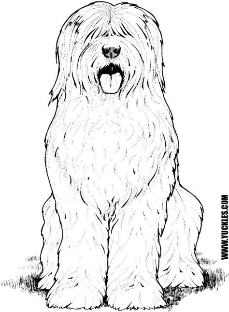 sheep dog coloring page old english sheepdog coloring page by yuckles