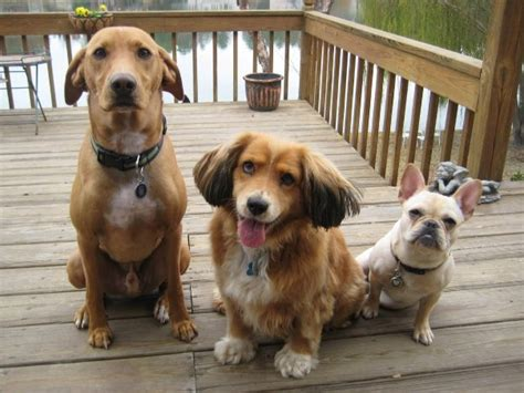 three dogs 3 dogs consultants mind