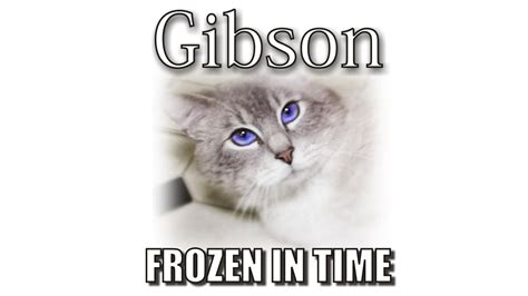 6 Signs Your Cat You Simon S Cat Guide To gibson s memorial frozen in time funnycat tv