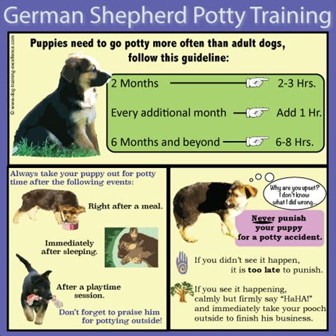 how to potty a german shepherd german shepherd puppy guide