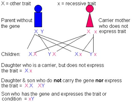 is color blindness dominant or recessive x linked recessive green color blindness hemophilia