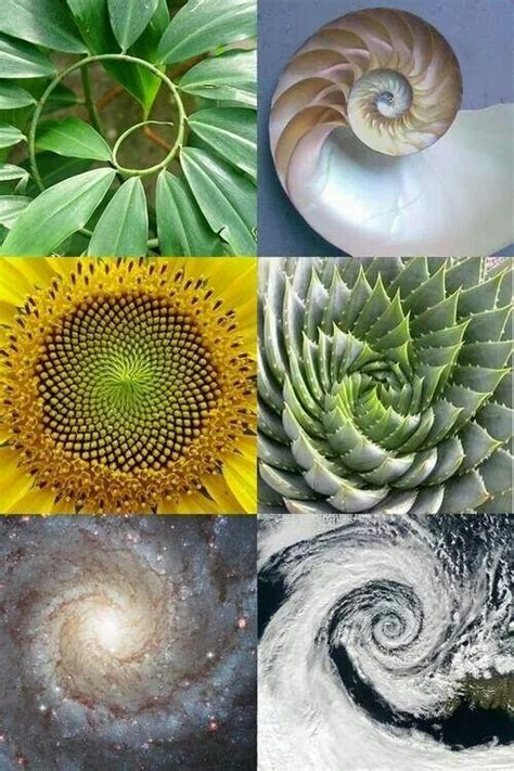 geometric pattern found in nature sacred geometry found in nature nature animals pinterest