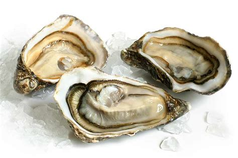 Kerang Oyster norovirus in oysters leads to closure of harvesting waters