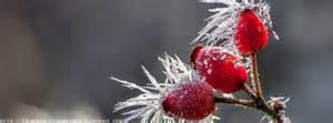 couverture saison hiver photo et image