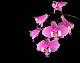 orchid flowers colors wallpaper wallpaper wallpaperlepi