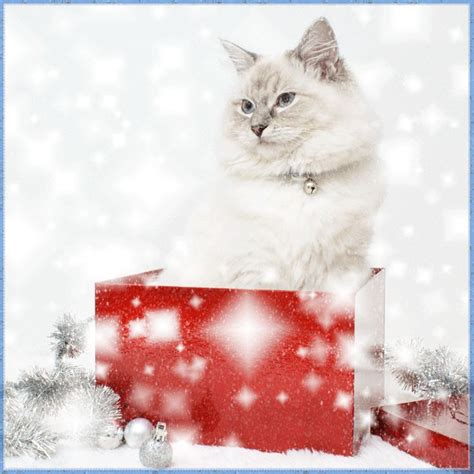 merry christmas happy  year christmas holiday gifs cute cats kittens cats