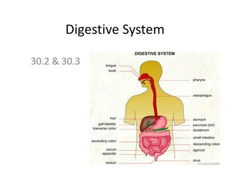 Ppt Digestive System Powerpoint Presentation Id 2406408 Digestive System Powerpoint
