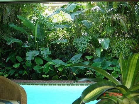 tropical landscape ideas the 25 best plants around pool ideas on