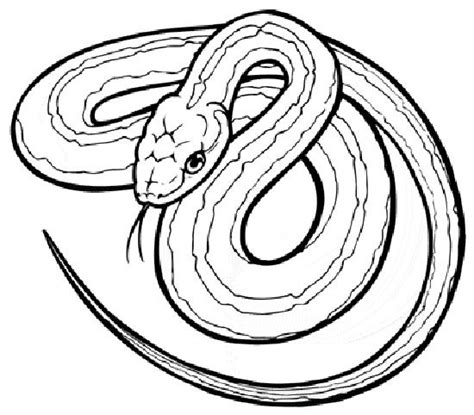 Garter Snake Coloring Page snake coloring pages 6 coloring