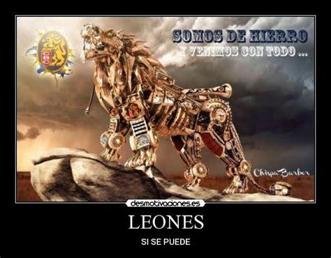 imagenes de los leones del caracas chistosas im 225 genes y carteles de leones pag 38 desmotivaciones