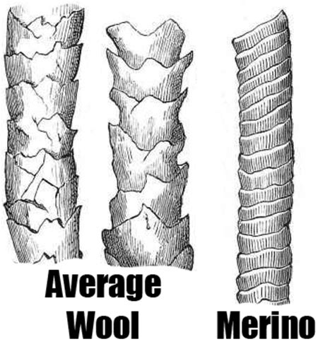 merino wool the standard for comfort and warmth