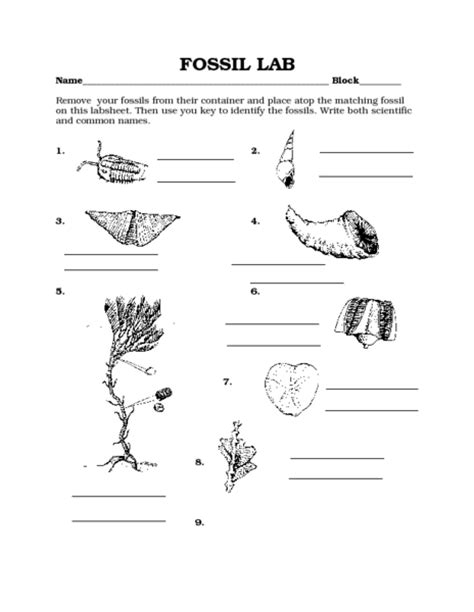 Fossil Worksheets by Pictures Types Of Fossils Worksheet Getadating