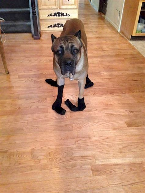 dogs in socks 14 sock wearing dogs you ll want to hug