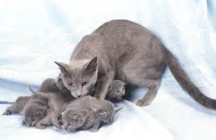 what is fading kitten syndrome pets4homes