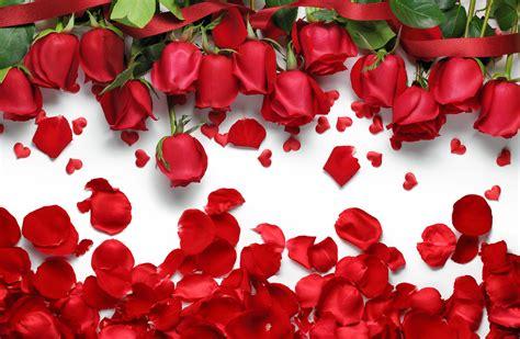 wallpaper flower petal rose petals hd wallpapers