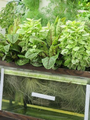 cool small plants to grow you can set up an aquarium to grow plants hydroponically