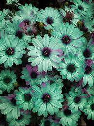 sfondi di fiori vari in viaggio con erika a flower the world