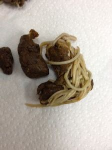 Puppy With Worms In Stool by Roundworm Of Dr Nelson S Veterinary