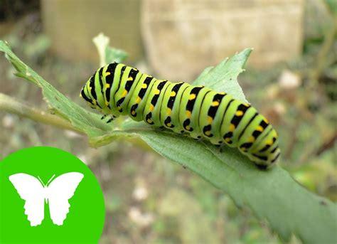 fotos animales invertebrados la eduteca los invertebrados youtube