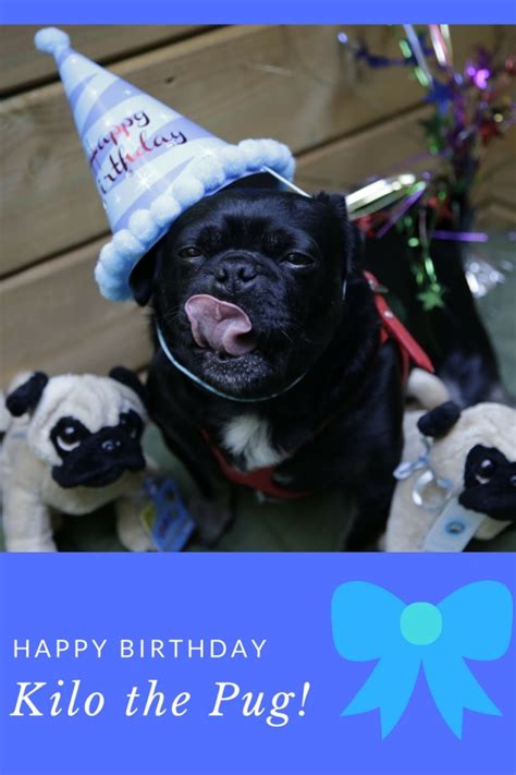 pug birthday ecards ed happy birthday pug car pictures car