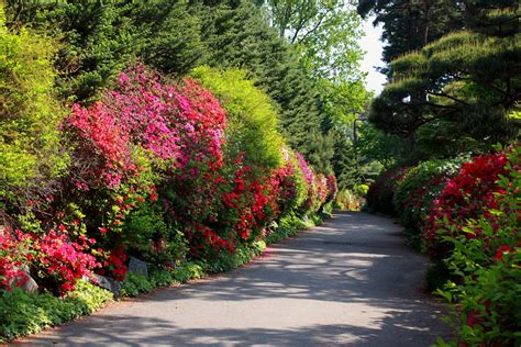 Free Stock Photo Flower Road Flowers Nature Free Flower Garden Scenery