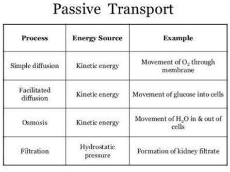 diseases related due  defect  transport mechanism