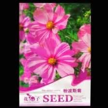 Bibit Benih Seeds Bunga Pink Sweet Alyssum benih alyssum gold dust 150 biji mr fothergills bibitbunga