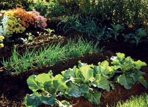 Tips For Fall Garden Vegetables Pinpoint Fall Garden Vegetables