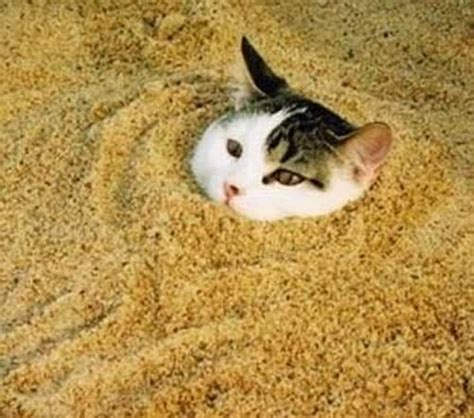 how to comfort a cat comfortable in kitty litter living years pets blog